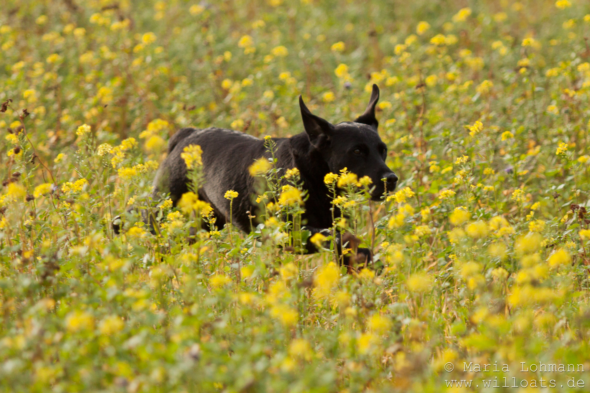 in the mustard